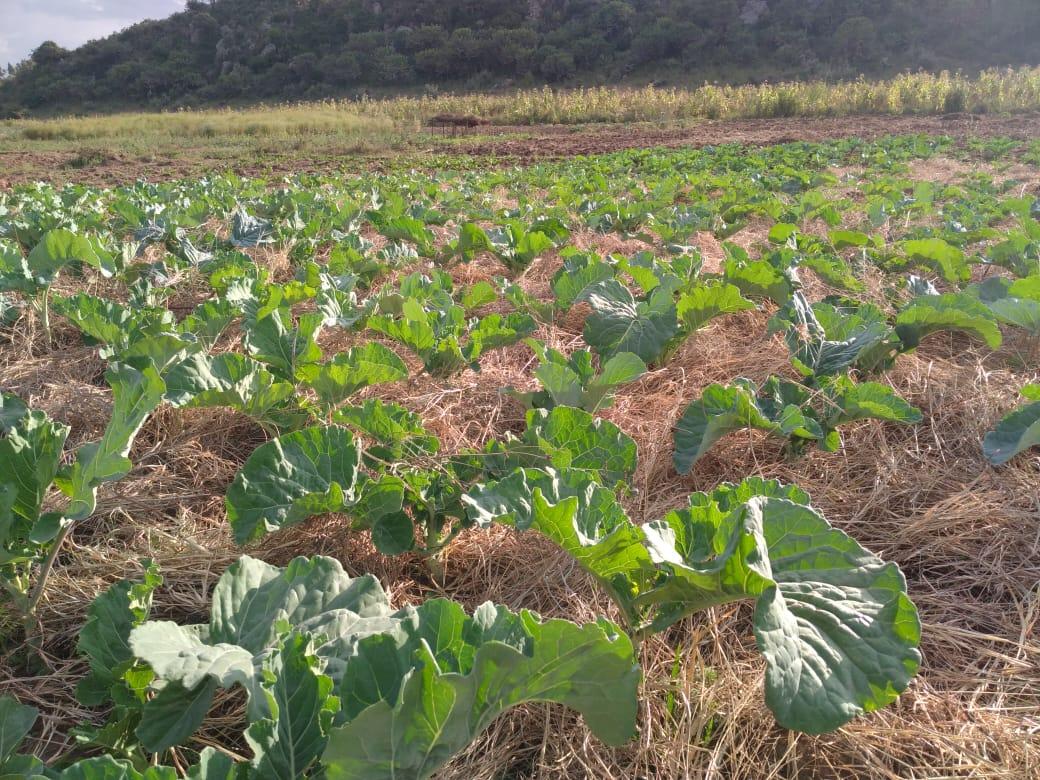 Wahinya Farm