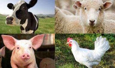 Peanne all round farm