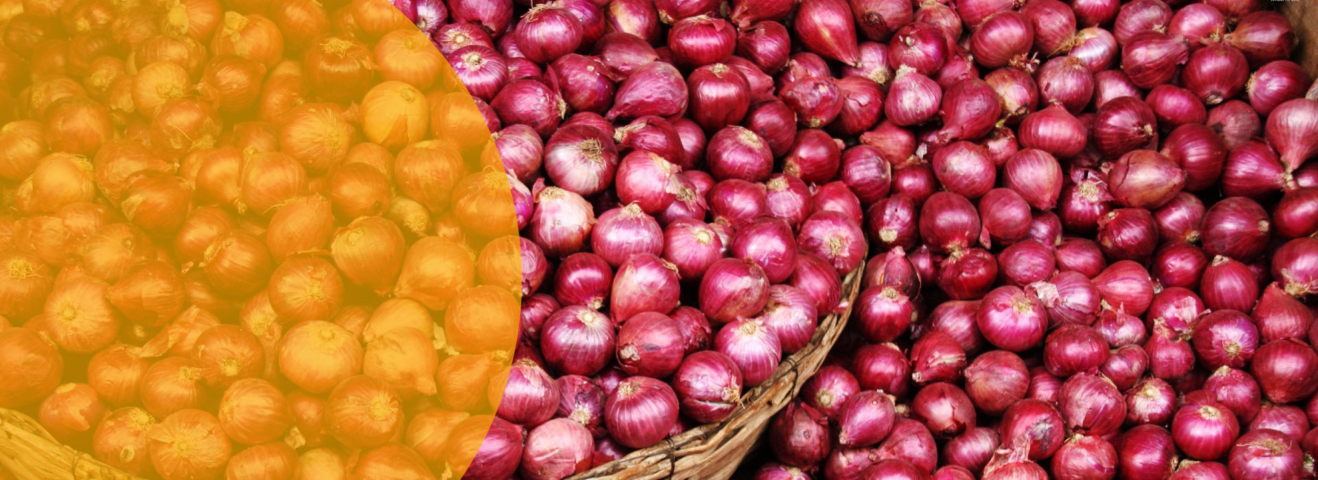 Diaz onion suppliers